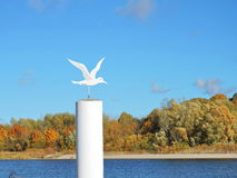 Metallic seagull sculpture. White metallic seagull near river, Lithuania Stock Image