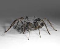 Metallic spider Stock Photography