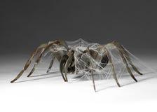 Metallic spider Stock Photo