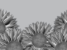 Metallic sunflowers background. For design Royalty Free Stock Image