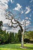 Metallic tree Stock Images