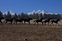 Metallpferden-Dekor Lizenzfreies Stockbild