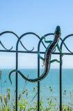 Metallprydnad på en balustrad i en sjösidaby, symbolisk li Arkivbild