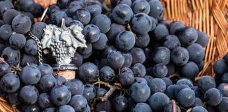 Metallweinproduktionsemblem umgeben durch blaue Trauben Stockfotografie