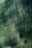 Metalu ciemnozielony porysowany talerz obraz royalty free