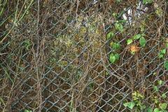 Metalu druciany ogrodzenie Obrazy Stock