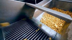 Metalu zbiornik dostaje wypełniał z kartoflanymi bulwami zbiory