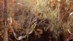 Metamorfizacja duzi mydlani bąble w zwolnionym tempie Zakończenie w górę widoku piękny duży mydlany bąbel lata blisko drzew przy zbiory wideo
