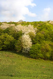 Metamorfose in aard, de lente van wit aan schaduwen van groen royalty-vrije stock afbeeldingen
