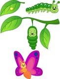 Metamorfose da borboleta Imagem de Stock Royalty Free