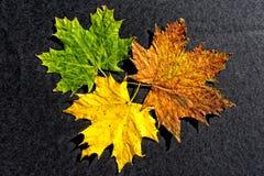 Metamorfose das folhas 02 da cinza Imagem de Stock Royalty Free