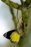 Metamorfosis Imagen de archivo