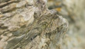 Metamorphic rock Stock Photography
