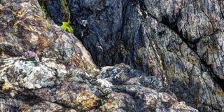 Metamorphic rocks layers. Quartzite and marble stock photography