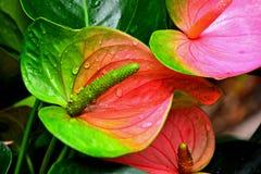 metamorphosis Royaltyfria Bilder