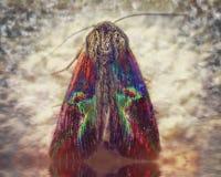 Metamorphosis of moth into a spiritual world stock photos