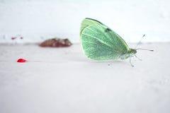 metamorphosispånyttfödelse Fotografering för Bildbyråer