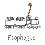 Metaphor function of Esophagus to carry food, liquids, and saliv. A from the mouth to the stomach vector illustration sketch hand drawn with black lines Stock Image