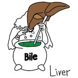 Metaphor function of a liver to produce bile vector illustration. Sketch hand drawn with black lines, isolated on white background. Education Medical concept Royalty Free Stock Photography