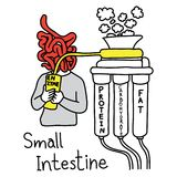 Metaphor function of small intestine to make enzyme to digest pr Royalty Free Stock Photography