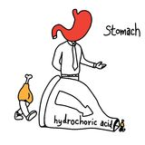 Metaphor function of stomach to use hydrochloric acid to make fo. Od smaller vector illustration sketch hand drawn with black lines, isolated on white background Stock Photos