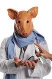 Metaphore di influenza dei maiali Immagine Stock