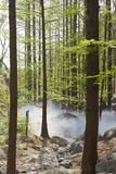 Metasequoiawald und -Erdwärme Lizenzfreies Stockbild