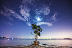 The meteor. Tree  among light the meteor in the dark night Stock Images