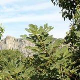 Meteora-Ansicht Stockfoto