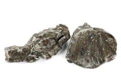 Meteorito de Sikhote-Alin fotos de archivo libres de regalías