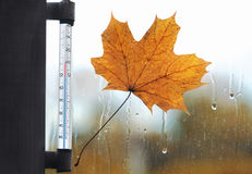 Meteorology, forecasting and autumn weather season concept. Thermometer and yellow maple leaf stuck to wet the glass from the rain drops Royalty Free Stock Images