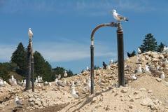 Methane gas on the landfill Stock Photos