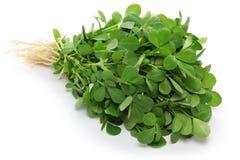 Methi, feuilles de fenugrec Images libres de droits