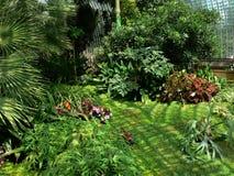 Methode durch das tropische Gewächshaus stockfoto
