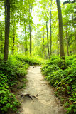 Methode im Wald lizenzfreie stockfotografie
