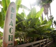 Methode, Zeichen auf Brandungs-Vorstand mit Palmen auf den Strand zu setzen Stockfoto
