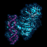 Methyltransferase do ADN ilustração royalty free