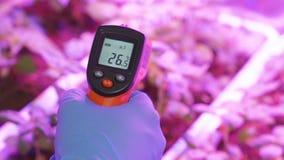 Meting en controle van temperatuur in de serre stock video