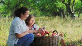 Meting voor de inhoud van nitraten in appelen stock video