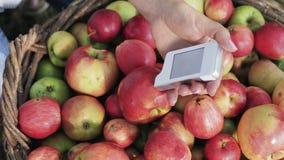 Meting voor de inhoud van nitraten in appelen stock footage