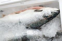 Metoden av lagring av den nya fisken i isbröstkorgen Royaltyfria Bilder