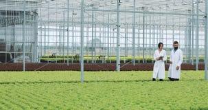 Metodo di coltura idroponica di coltivare insalata in serra Due assistenti di laboratorio con la compressa esaminano lo stato del video d archivio