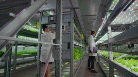 Metodo di coltura idroponica di coltivare insalata in serra Quattro assistenti di laboratorio esaminano la crescita verdeggiante  stock footage