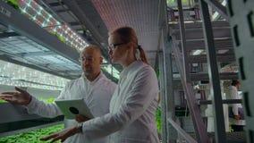 Metodo di coltura idroponica di coltivare insalata in serra Quattro assistenti di laboratorio esaminano la crescita verdeggiante  video d archivio
