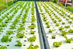 Metodo di coltura idroponica di coltura delle piante Immagine Stock
