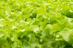 Metodo di coltura idroponica di coltura delle piante Immagini Stock Libere da Diritti