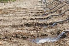 Metodo di irrigazione di Wather ad un campo di azienda agricola di agricoltura Immagini Stock