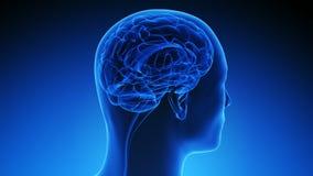 Metodología de la exploración de cerebro (colocada) Imagen de archivo