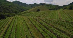 Metragem aérea da adega da paisagem da agricultura do vinhedo do campo em Eslovênia Europa vídeos de arquivo