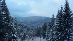 Metragem aérea da floresta da árvore de abeto do inverno nas montanhas Vista de cima dos pinheiros cobertos com a neve Quadcopter video estoque